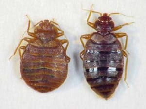 fed bed bug milwaukee unfed