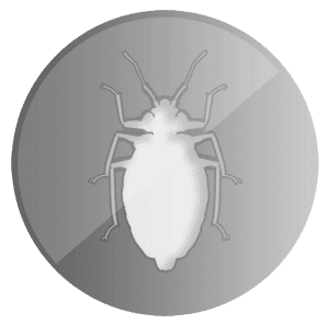 Milwaukee Bed Bug Pros Silver